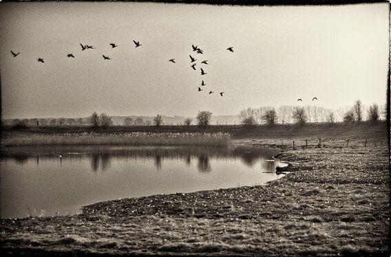 Nostalgische Vogels