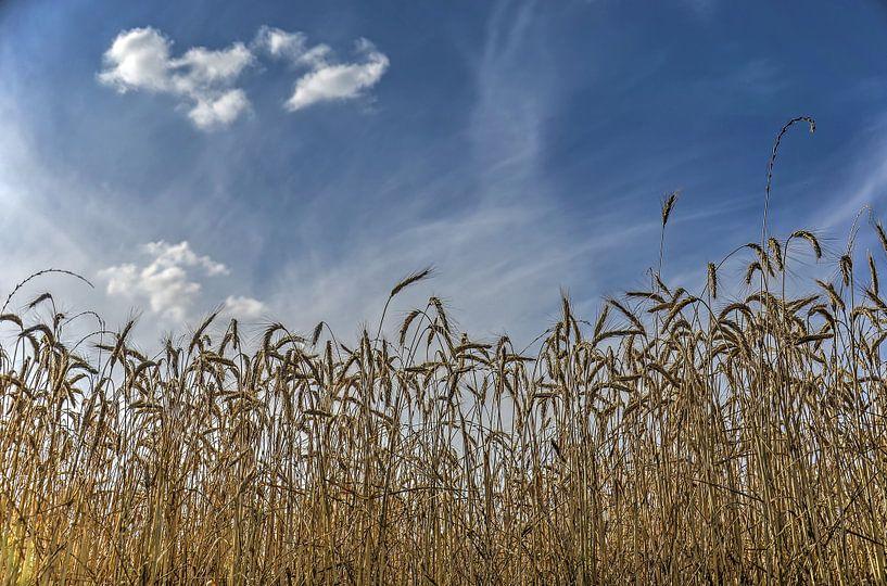 Korenaren onder een blauwe hemel van Frans Blok