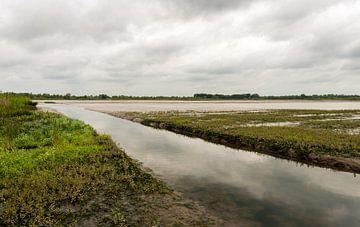 Moerassig gebied in de Brabantse Biesbosch sur Ruud Morijn