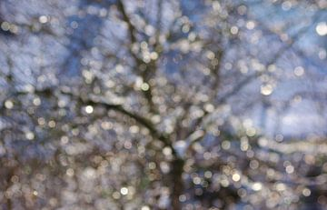 Winter Shimmer