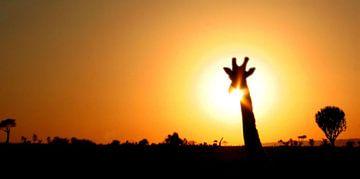 giraffe silhouette safari sur Martijn Wams