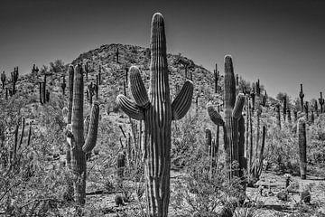 Paysage en Arizona noir-blanc sur Melanie Viola
