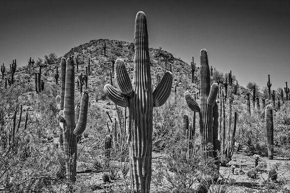 Landschap in Arizona zwart-wit