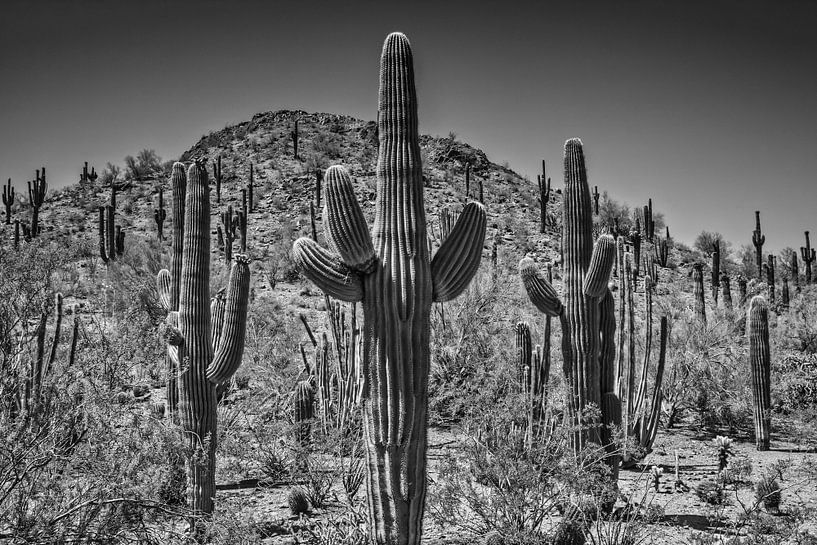 Landschap in Arizona zwart-wit van Melanie Viola