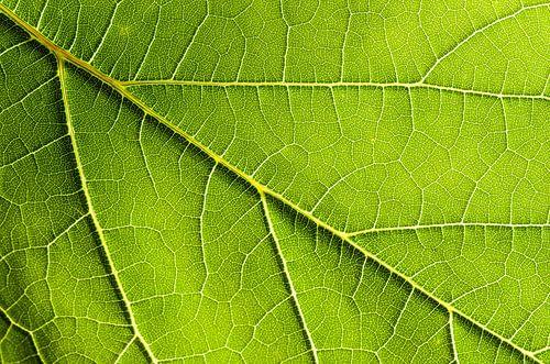 Grape leaf von Focco van Eek
