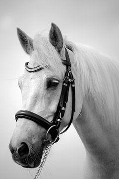 paardengezicht von Lonneke Prins