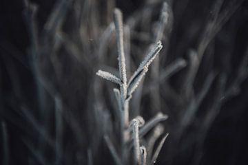 Gefrorene Zweige von Sanne Dost