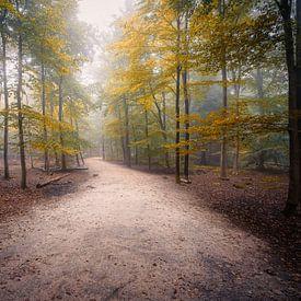 Mastbos mistige bos 7 van Björn van den Berg