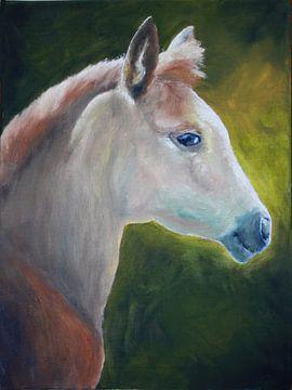 Foal sur Andrea Meyer