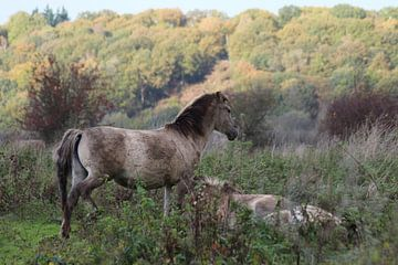 Paarden sur t de bruin