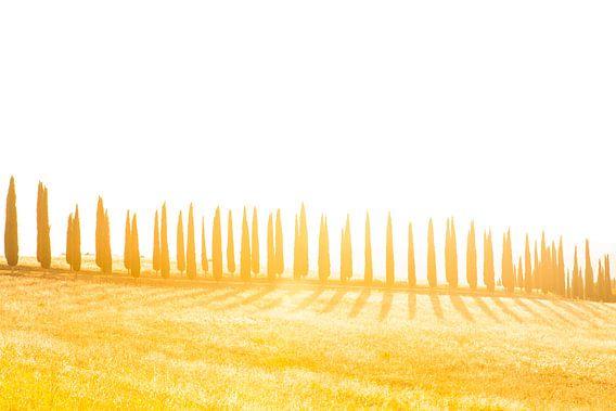 Cipressenlaan met schaduwen, zonsondergang