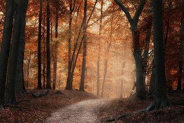 Herbstmorgen von Elly Besselink