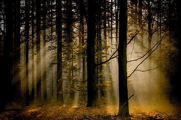 zonzicht op de herfst sur Lex Scholten