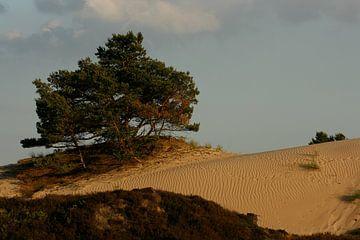Kale Duinen (Aekingerzand) in Nationaal Park Drents-Friese Wold bij Appelscha van