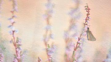 Vlinder op de heide van Francis Dost