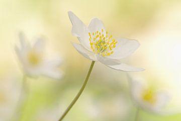 Leve de lente! van margreet van vliet