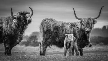 Vader, moeder en kalf in zwart wit van Dirk van Egmond