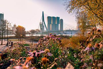 L'automne dans le parc de Rotterdam sur Arisca van 't Hof