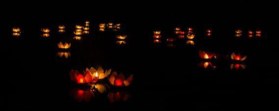 Verlichte lelies op het water.