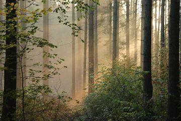 Bäume und Sonne von matthijs iseger