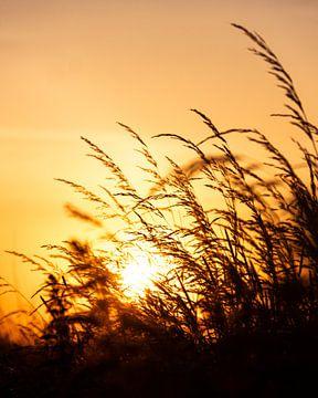 Hoog gras in de avondzon van Wouter Bos