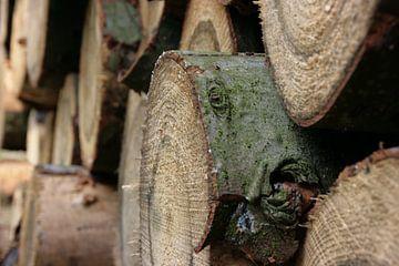 Een stapel boomstammen van Marije van den Wijngaard