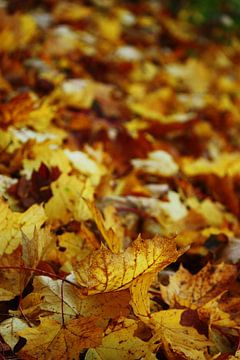 Goldener Herbst XI von Meleah Fotografie