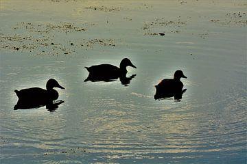 Eenden in het water von David van Coowijk