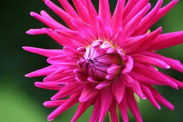 bloem van Lieke Roeven
