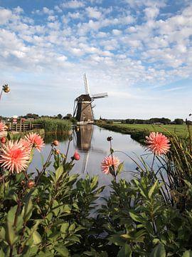 Mühle mit rosa Dahlienblüten in einer Polderlandschaft von iPics Photography