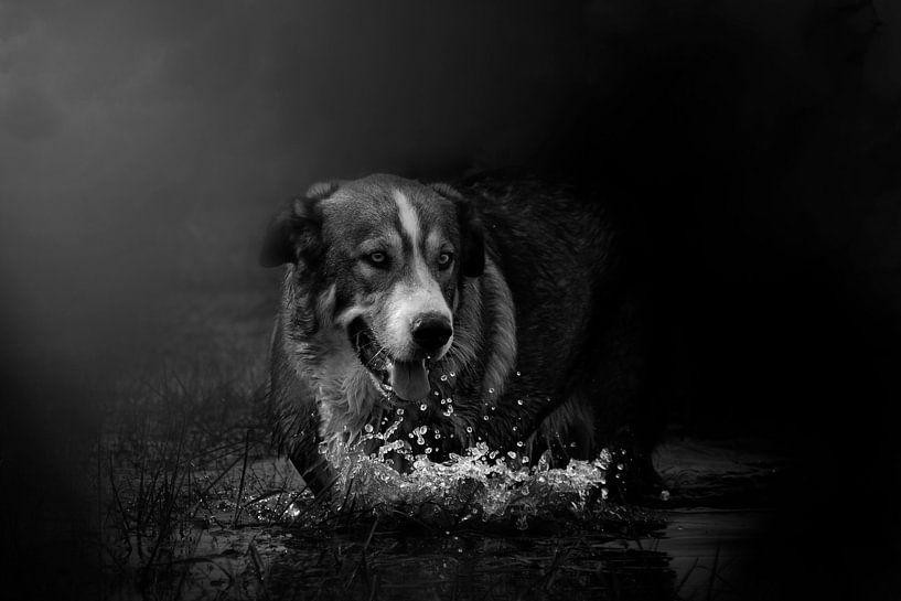 Hond in water en mist van Meg Branca
