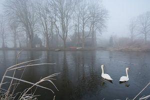 Zwanenmeer van