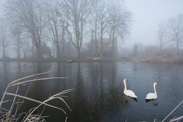 Zwanenmeer van Marco Bakker