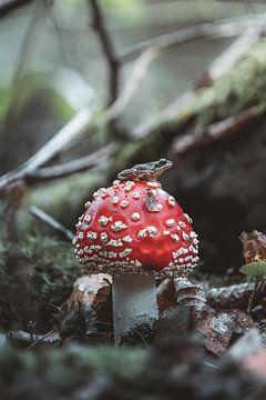 Kikker op de paddenstoel wachten op zijn prooi