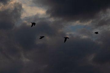 Vogels met donkere wolken van Nynke Altenburg