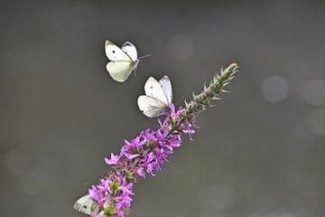 Fliegender Schmetterling von Daphne van der straaten