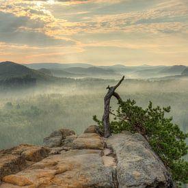 Stativkiefer im Elbsandsteingebirge von Michael Valjak