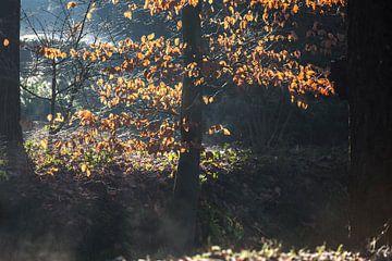 Dampfstrom und Sonnenlicht durch Blätter von Etienne Oldeman