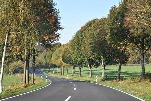 Slingerende landweg door een herfstlandschap sur