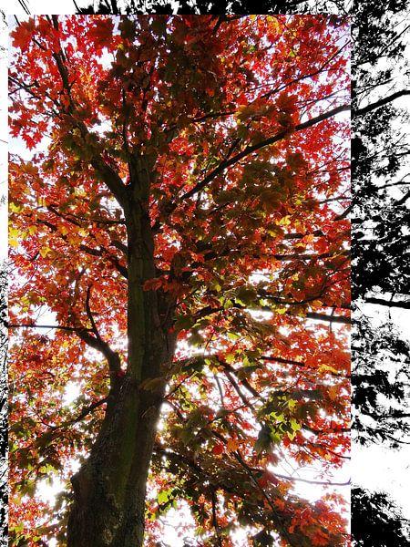 Tree Magic 57 van MoArt (Maurice Heuts)