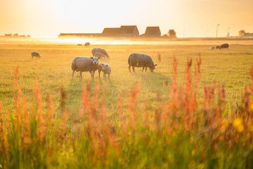 Voorjaarslicht op het eiland Marken van Fotografiecor .nl