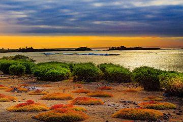 De  Galapagos von René Holtslag