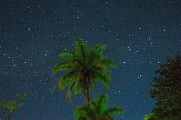 Palme mit Sternenhintergrund von Isai Meekers