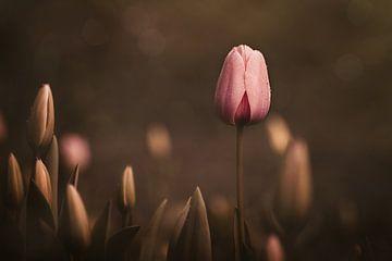 Moody Pink Tulip van Marina de Wit