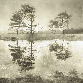Grenzpark Kalmthoutse Heide von Lars van de Goor