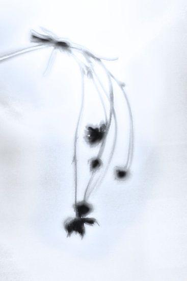 Fading Nature 1 van Pieter van Roijen