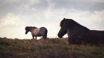 Pferde in der Veluwe I von Luis Fernando Valdés Villarreal Boullosa
