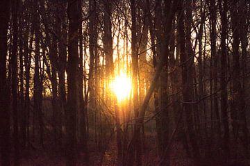 Vuurbal door de kale bomen van Tom Keysers
