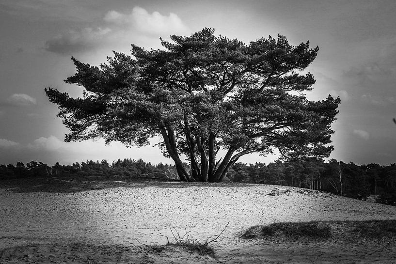 Lonely tree 1 van Marco van de Pol