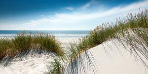 Heldere elegantie , glanzende duinen aan het Noordzeestrand